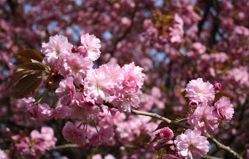 Baumblüten im Tierpark Berlin, 2010