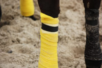 Bandagen für die Pferde...