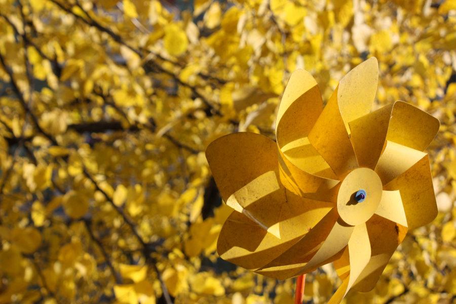 Goldener Herbst Gelb Windrad Blätter Berlin 2011