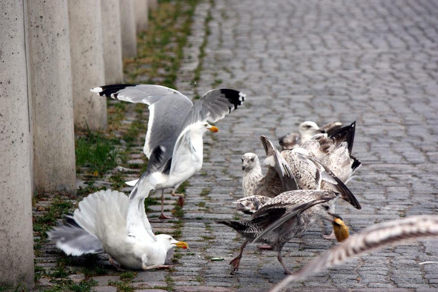 Möwen Fischbrötchen Warnemünde 2012