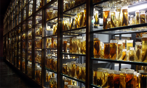 Nasssammlung Museum Naturkunde Berlin 2010