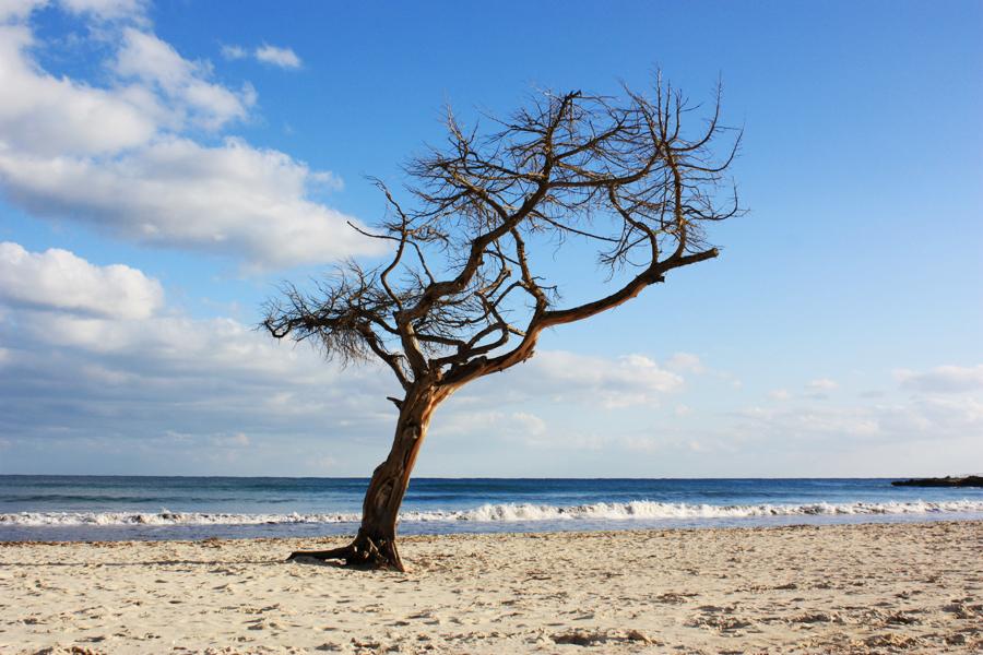 Sa Coma Mallorca Strand Baum 2010