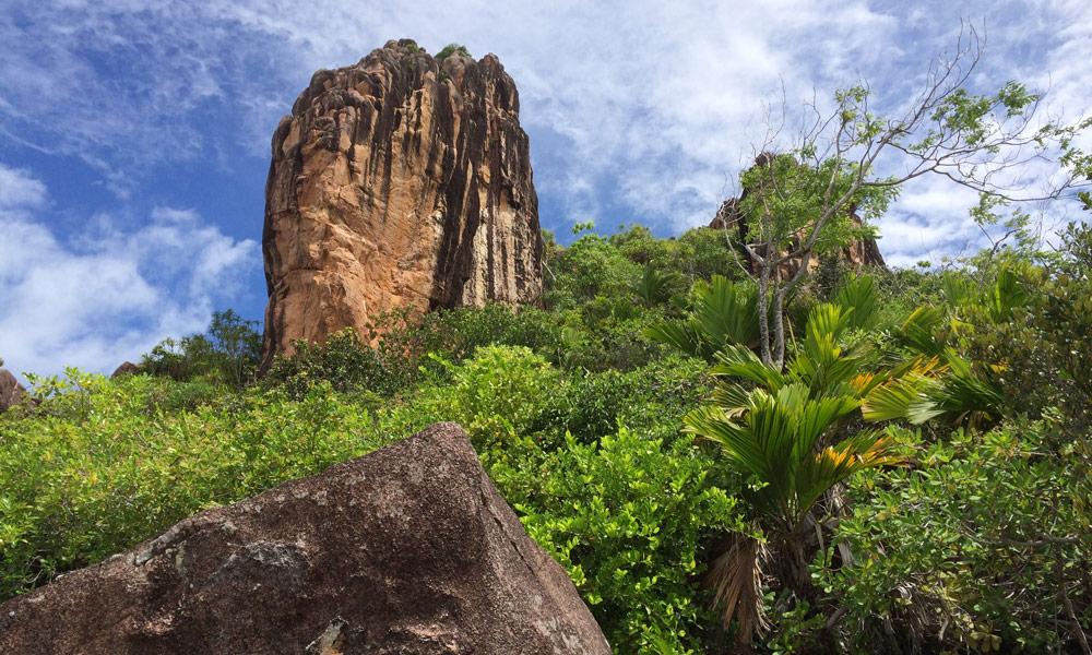 Mangrovenwälder auf Curieuse, Seychellen