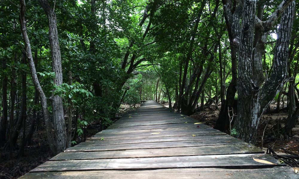 Pfad durch die Mangrovenwälder auf Curieuse, Seychellen