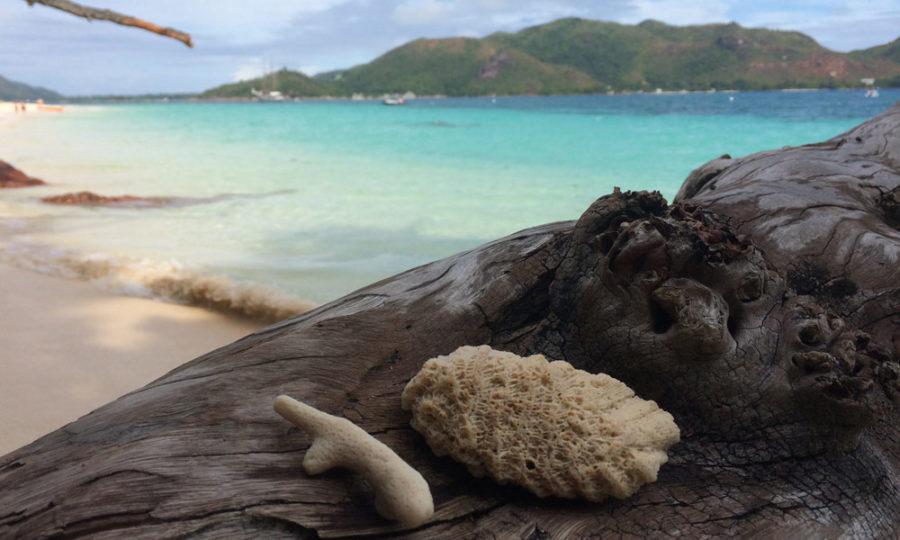 Strandgut auf Curieuse, Seychellen